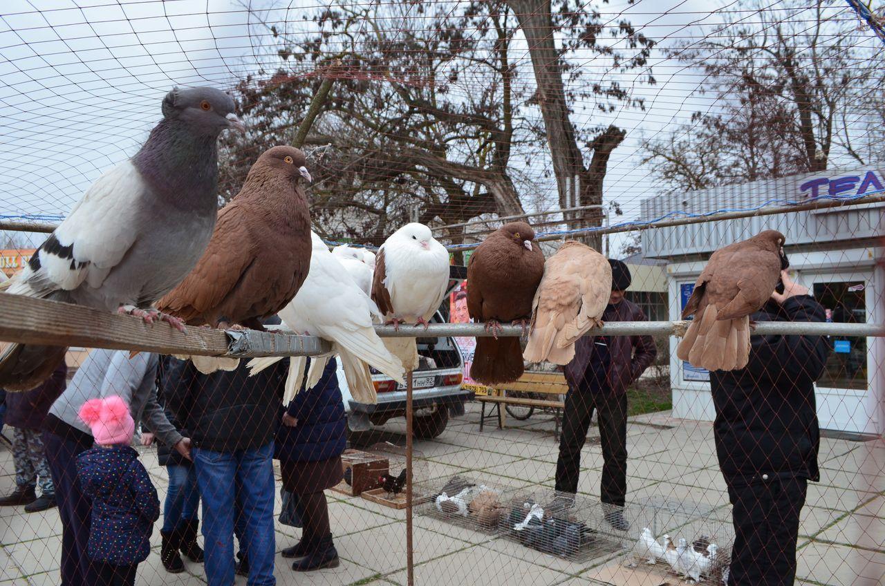 16 февраля на центральной площади посёлка Раздольное прошла ярмарка голубей, декоративных птиц и домашних животных