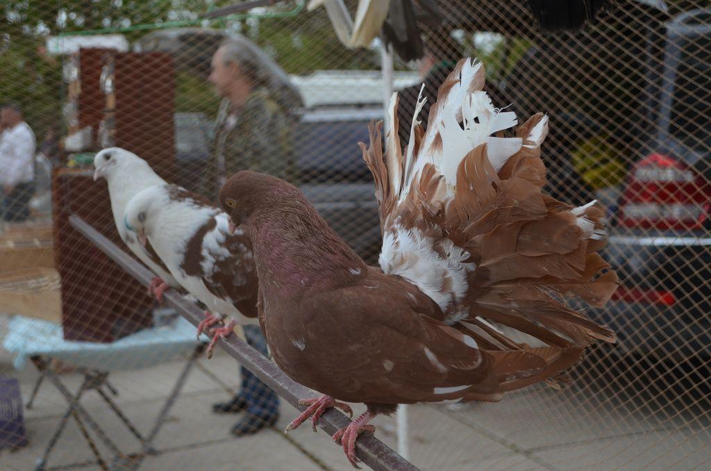 В Раздольном прошла одиннадцатая птичья выставка-ярмарка